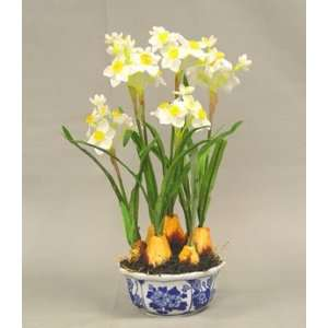 Daffodil w/ Onion Head in Pot   White Yellow Color